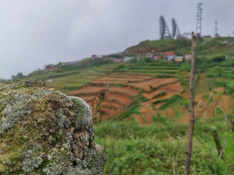 Mt.cabuyoao 小黃花